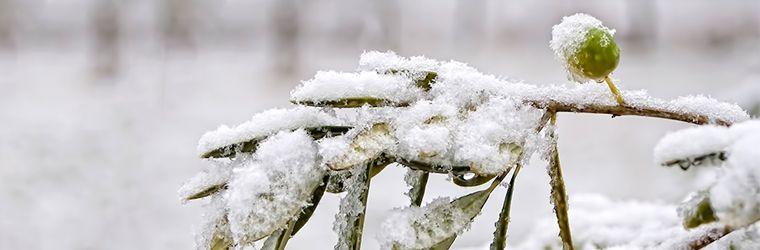 cuidados-invierno-1