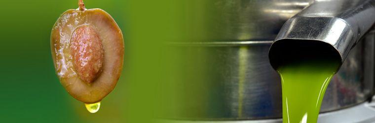 produccion de aceite de oliva 2018/2019