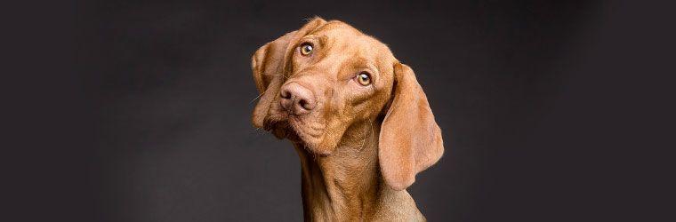 ¿puedo darle AOVE a mi perro?